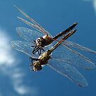 Dragon fly by bobby1