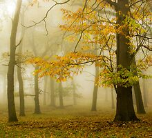 Foggy Morning by imagejournal