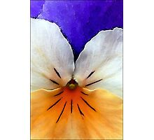 Proud to be a Pansy Photographic Print