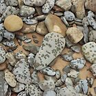 Rain Speckled Stones  by Thomas Martin