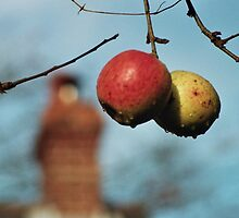 Pair of Apples In front of House by Thomas Martin