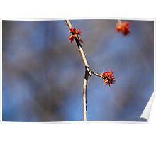 Illusive Spring Poster