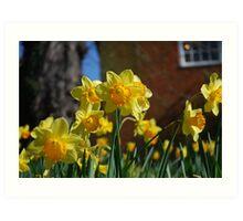 Farnham in Springtime No2 Art Print