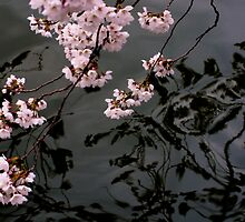 Blossom Reflection by Eric G Brown
