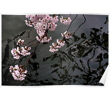 Blossom Reflection Poster