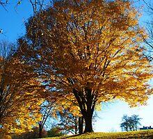 Ablaze with Firey Leaves by Jackie Mayblum