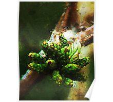Oak Cluster in Spring Poster