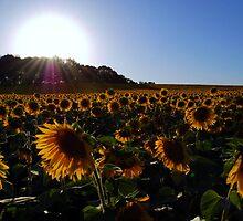 The Sun's Love by Jackie Mayblum