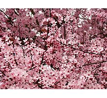 Spring Tree Blossoms Pink Flowering Trees art Baslee Troutman Photographic Print