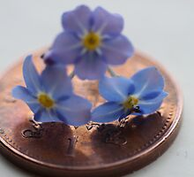 3 flowers one penny by yampy