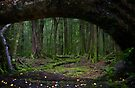 The Forest, Paradise, NZ by Odille Esmonde-Morgan