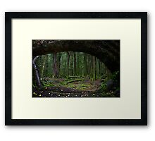 The Forest, Paradise, NZ Framed Print