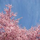 Spring Bright Blue Sky Floral art Pink Tree Blossoms Baslee Troutman by BasleeArtPrints