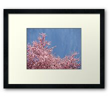 Spring Bright Blue Sky Floral art Pink Tree Blossoms Baslee Troutman Framed Print