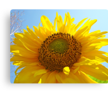 Bright Colorful Yellow Sunflower art Baslee Troutman Canvas Print