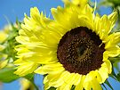 Summer SunFlowers Garden Yellow Sun Flowers art Baslee Troutman by BasleeArtPrints