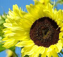Summer SunFlowers Garden Yellow Sun Flowers art Baslee Troutman by BasleeArtPrints