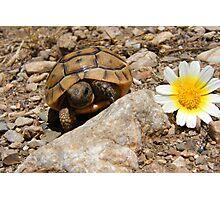 Baby Tortoise Photographic Print