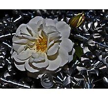 """ Heavy Metal Rose "" Photographic Print"