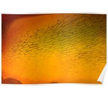 fishnet stockings ablaze Poster