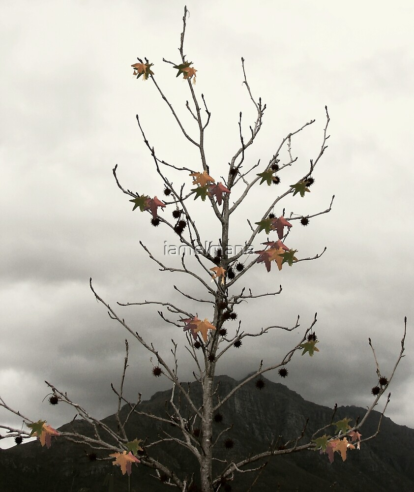 Turn of the seasons by iamelmana