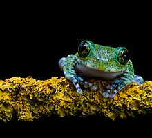 My friend the Peacock frog by Angi Wallace