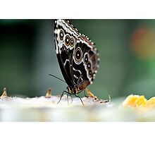 Butterfly in the mist Photographic Print