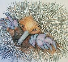 Mackenzie the Echidna by Lynelle Westlake