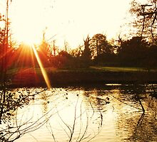 Rays over the Pond by MichelleRees
