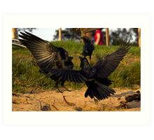 Crow fight at Long reef Art Print
