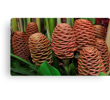 Chocolate Ball Ginger Flower Canvas Print