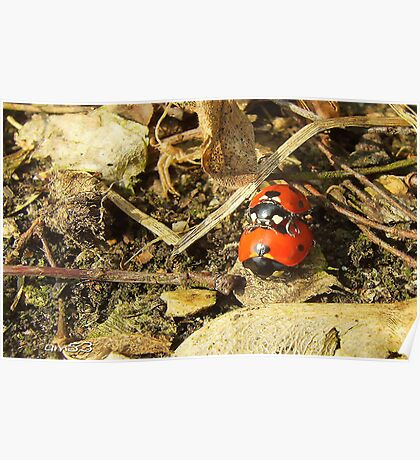 Ladybugs, spring is in the air. Poster