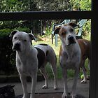 can we come in.. our paws are clean :-) by chrissy mitchell