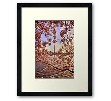 Cherry Blossoms And the Washington Monument Framed Print