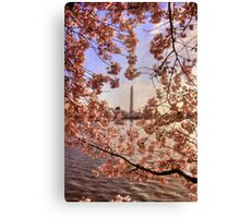 Cherry Blossoms And the Washington Monument Canvas Print