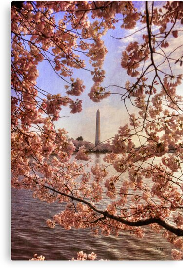 Cherry Blossoms And the Washington Monument by Lois  Bryan