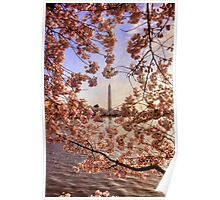 Cherry Blossoms And the Washington Monument Poster