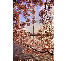 Cherry Blossoms And the Washington Monument Photographic Print