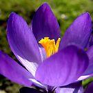 First Bloom by kkmarais