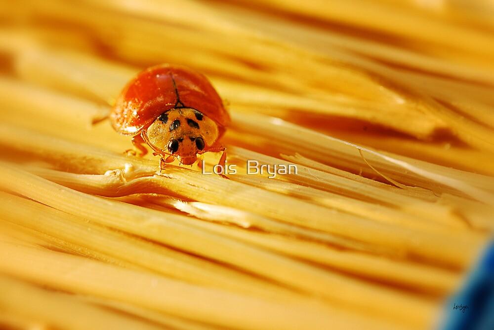 Bug On A Broom by Lois  Bryan