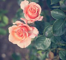 Roses by Marie Carr