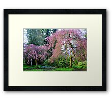 Pretty in Pink - Van Dusen Botanical Gardens Framed Print