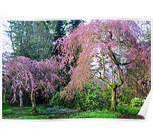 Pretty in Pink - Van Dusen Botanical Gardens Poster