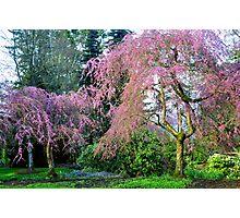 Pretty in Pink - Van Dusen Botanical Gardens Photographic Print