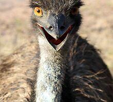 Australian Emu by jansant