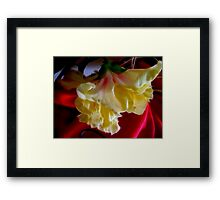 Hybiscus Yellow Fire Framed Print