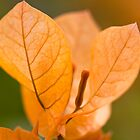 Golden Leaves by Hege Nolan