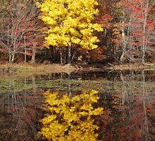 Catskills Foliage by Baina Masquelier