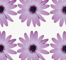Purple Daisies with a white background Sticker