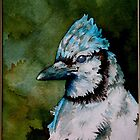 Summer Blues, showy & noisy backyard Blue Jay  by Huckleberry20